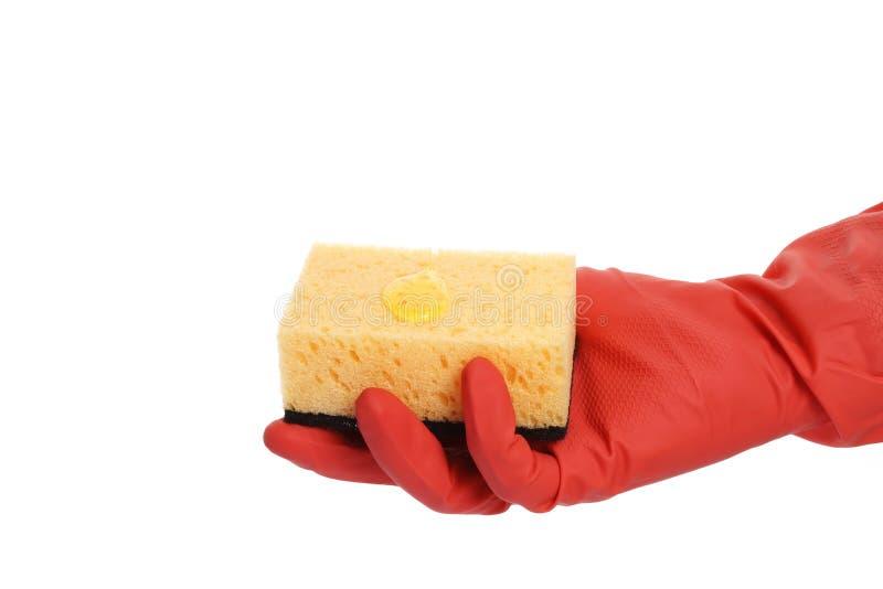 Mano con guantes que sostiene una esponja aislada en el fondo blanco imagen de archivo