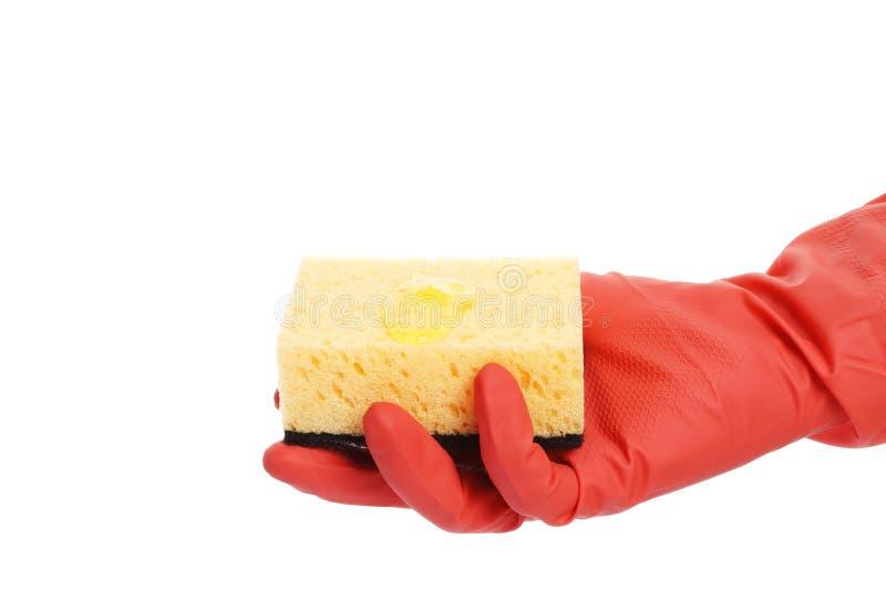 Mano con guantes que sostiene una esponja aislada en el fondo blanco foto de archivo libre de regalías