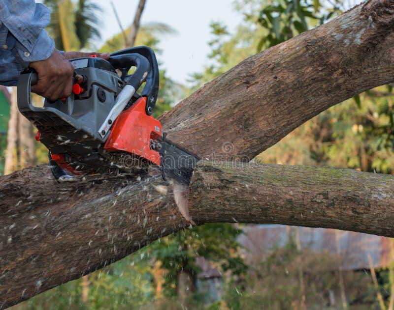 Mano con la motosega che taglia l'albero fotografia stock