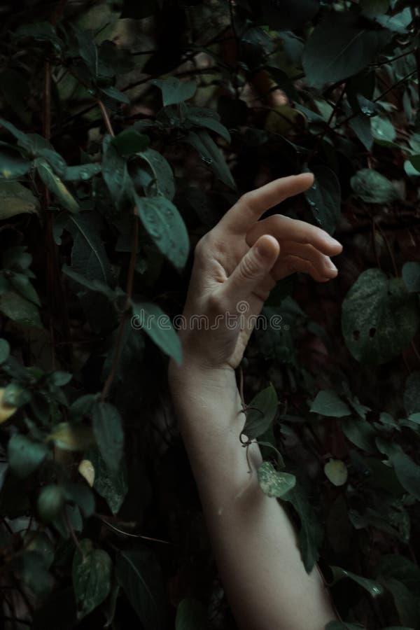 Mano contro il fondo verde delle foglie fotografia stock