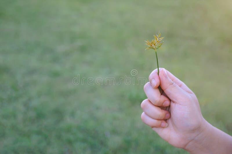 Mano de la hierba floreciente del control de la mujer mientras que se relaja en el campo fotos de archivo