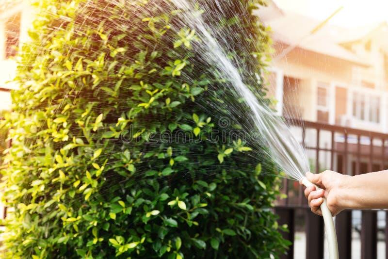 Mano de la mujer mayor que sostiene la manguera de goma del agua que riega el árbol con el fondo de la luz del sol foto de archivo libre de regalías