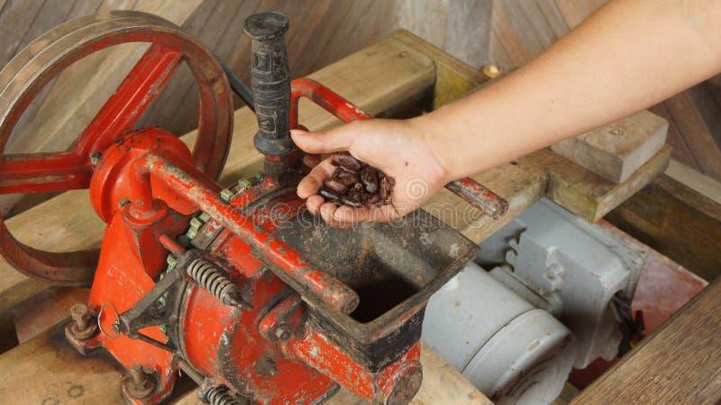 Mano de la mujer que pega granos de cacao en un molino eléctrico imagen de archivo libre de regalías