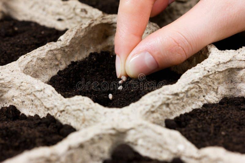 Mano de la mujer que planta la semilla en la tierra o el suelo siembra de la primavera fotos de archivo libres de regalías