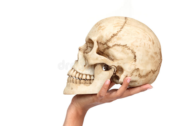 Mano de la mujer que sostiene el cráneo humano fotografía de archivo