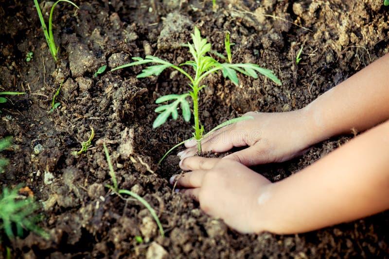 Mano de la niña del niño que planta el árbol joven en suelo negro fotografía de archivo libre de regalías