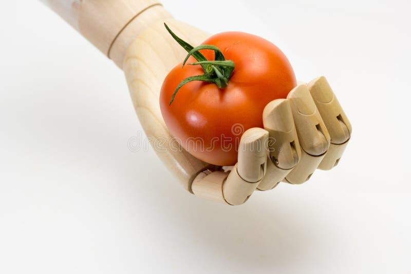 Mano de madera que sostiene un tomate maduro fotos de archivo libres de regalías