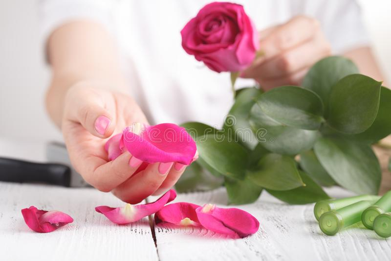 Mano de una mujer del florista por completo de los pétalos color de rosa para casarse imagen de archivo