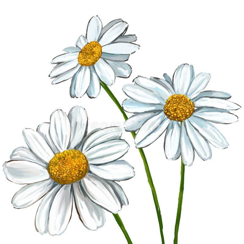 Mano del ejemplo de Daisy Vector dibujada pintada ilustración del vector