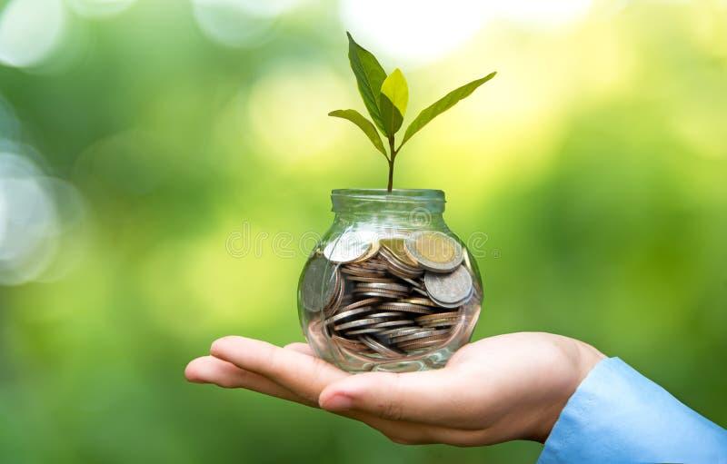 Mano del hombre de negocios que sostiene la planta creciente de la cubierta del dinero de la moneda Plante el crecimiento fuera d fotografía de archivo
