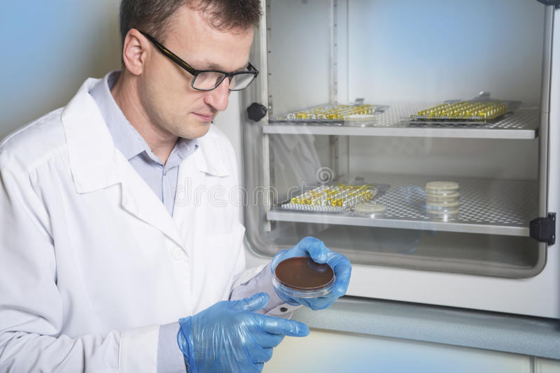 Mano del microbiologo che coltiva i cicli della capsula di Petri di un'inoculazione del briciolo, accanto all'autoclave fotografia stock libera da diritti
