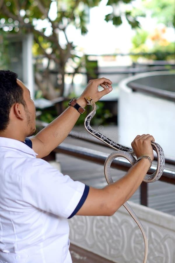 Mano del morso del serpente fotografia stock libera da diritti