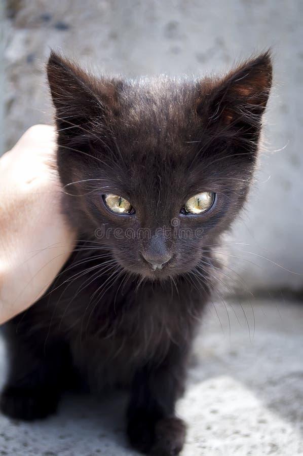 Mano del niño que frota ligeramente la cabeza del pequeño gatito lindo fotografía de archivo libre de regalías