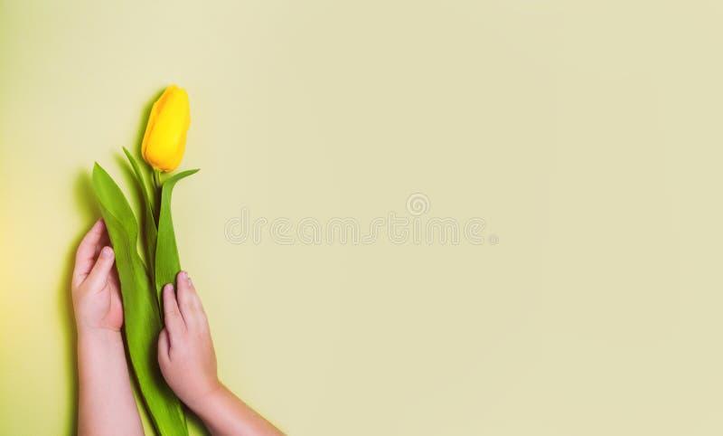Mano del niño que sostiene el tulipán amarillo en fondo amarillo imagen de archivo
