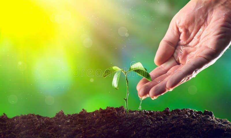 Mano del ` s del granjero que riega una planta Crecimiento de la plántula  imagen de archivo libre de regalías