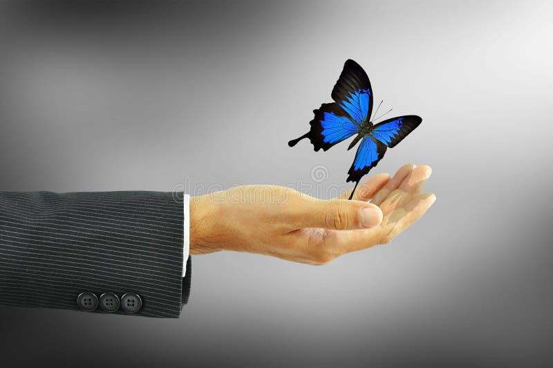 Mano dell'uomo d'affari che libera una farfalla fotografie stock libere da diritti