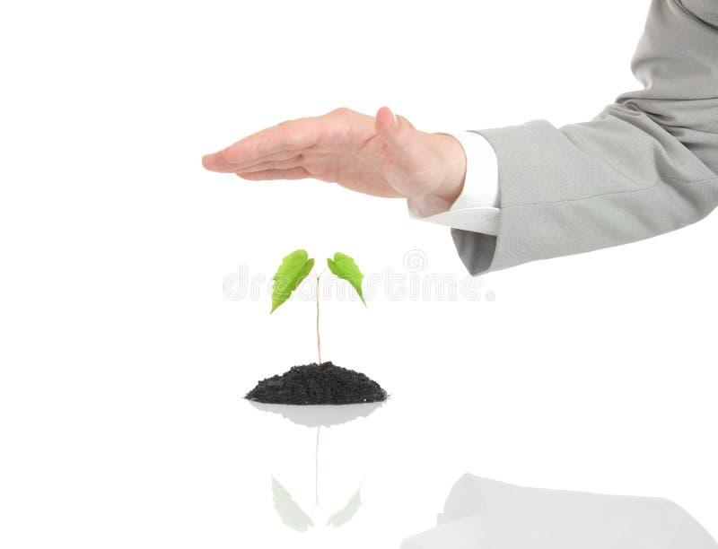 Mano dell'uomo d'affari che protegge pianta verde isolata immagine stock libera da diritti