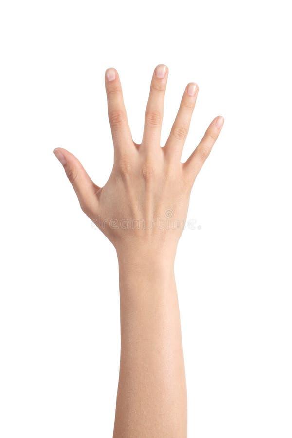 Mano della donna che mostra le cinque dita fotografia stock