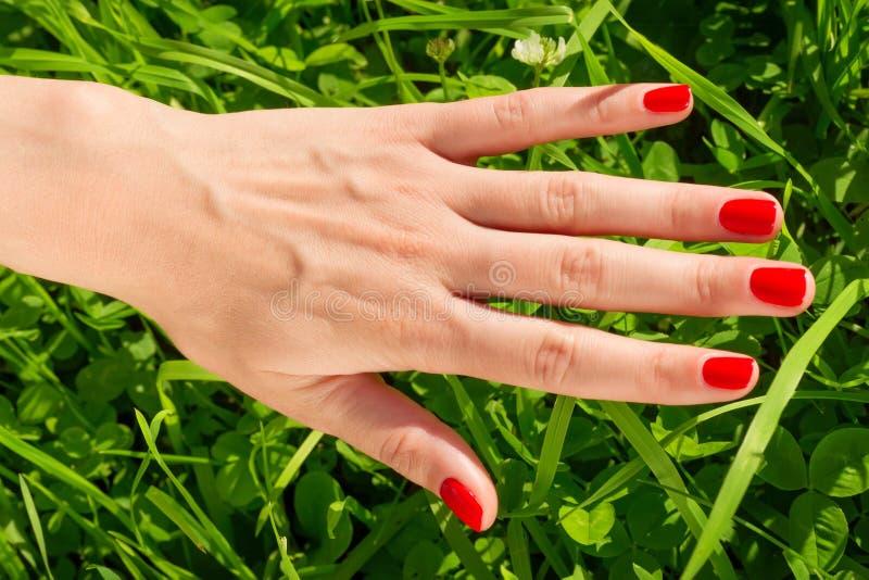 Mano della donna con i chiodi rossi luminosi contro erba verde fotografia stock