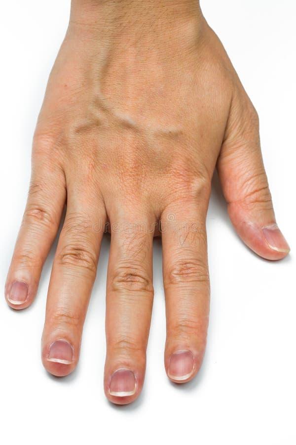 Mano della donna con le vene ematiche isolate su fondo bianco Il dito con capelli mezzo digitali è gene dominante Pelle del dorso fotografia stock