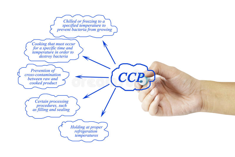 Mano della donna e presentazione del punto di controllo critico & di x28; CCP& x29; concentrato fotografia stock
