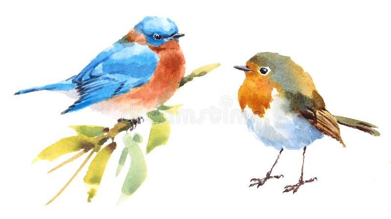 Mano determinada del ejemplo de la acuarela de los pájaros del petirrojo y del azulejo dibujada ilustración del vector