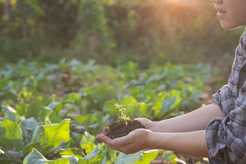 Mano di agricoltura che tiene un albero del bambino fotografia stock