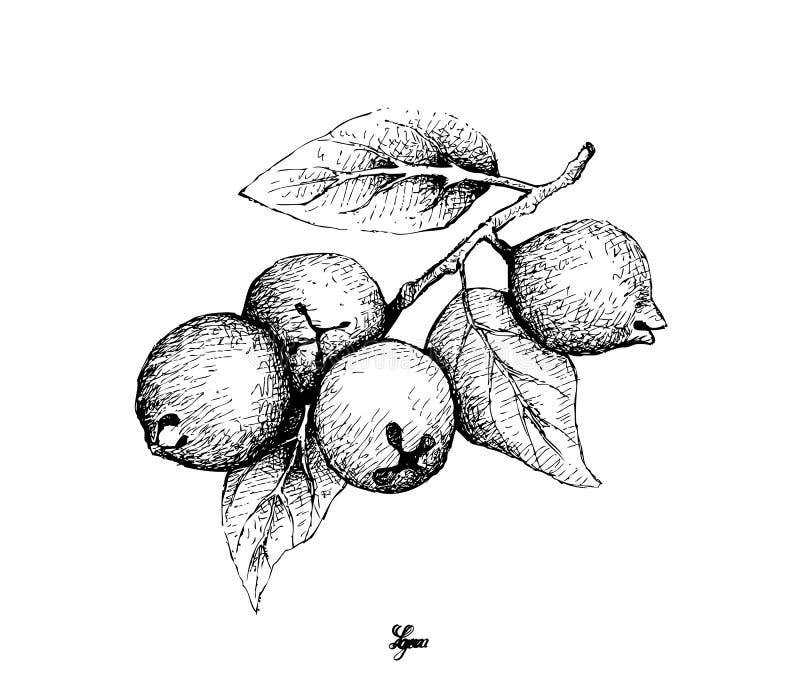 Mano dibujada de la guayaba del limón en el fondo blanco libre illustration