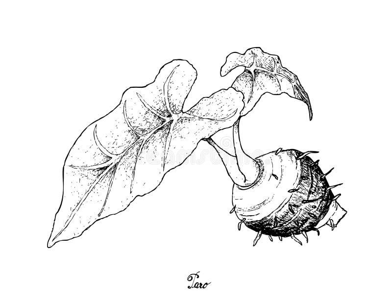 Mano dibujada de Taro Roots en el fondo blanco stock de ilustración