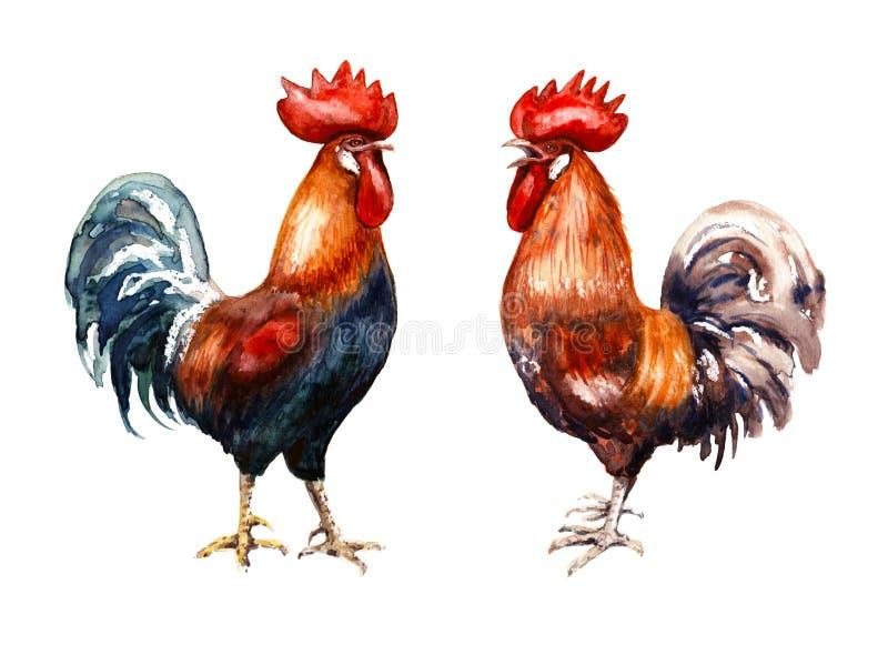 Mano dibujada dos gallos rojos stock de ilustración