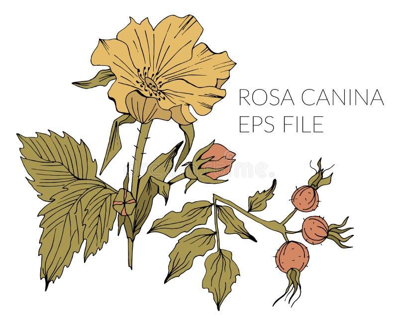 Mano dibujada para garabatear elementos florales libre illustration