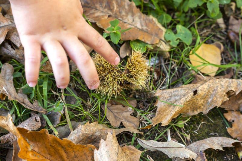Mano e foglie del bambino immagine stock