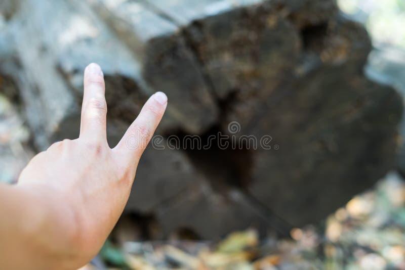 Mano e legno del segno di V fotografie stock