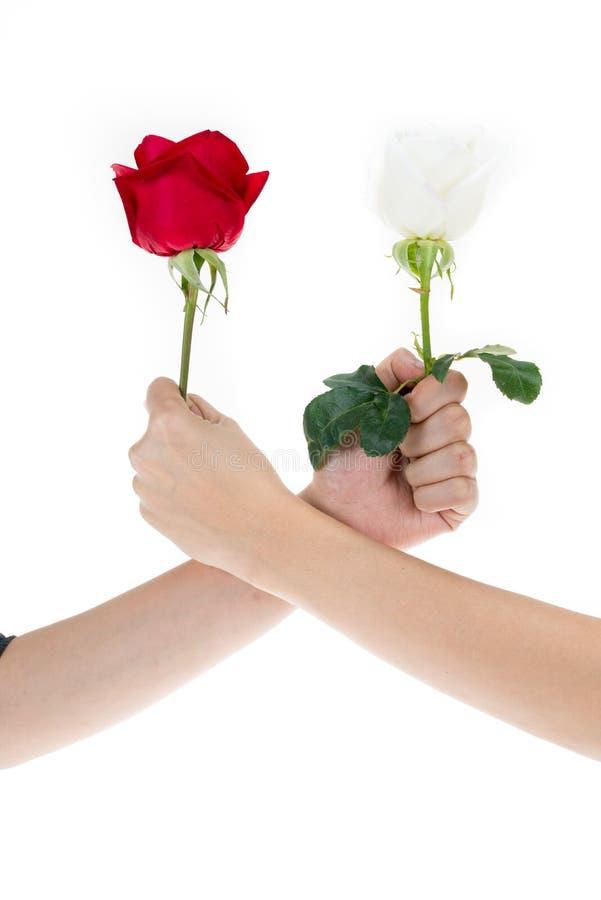 Mano facendo uso della rosa rossa e della rosa di bianco per fare un braccio lottare immagini stock