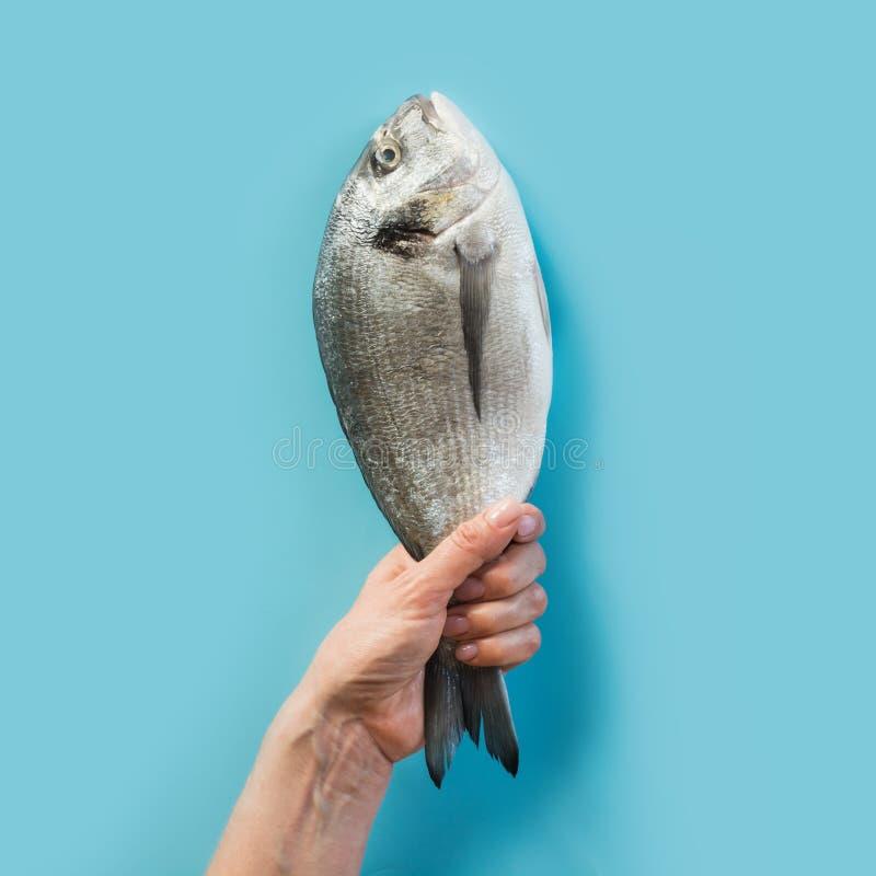 Mano femenina con la cola de los pescados del dorado en el papel azul como color del mar fotografía de archivo