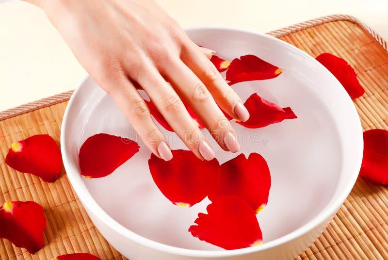 Mano femenina en el cuenco blanco con peta del agua y de la rosa del rojo imágenes de archivo libres de regalías