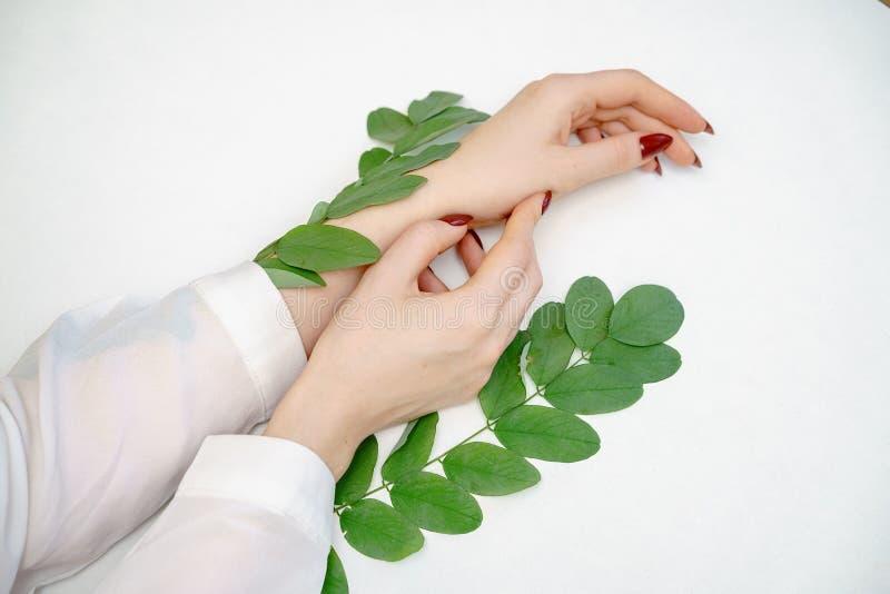 Mano femenina hermosa que miente en el fondo blanco con la ramita con las hojas verdes, concepto del cuidado de la mano foto de archivo