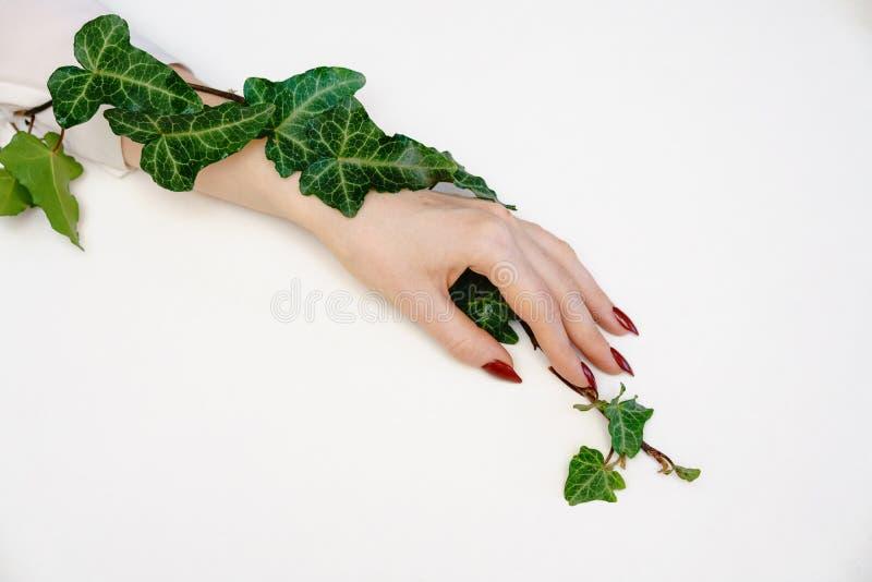 Mano femenina hermosa que miente en el fondo blanco con la ramita con las hojas verdes, concepto del cuidado de la mano fotos de archivo libres de regalías