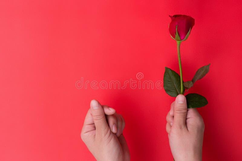 Mano femenina hoding la rosa roja foto de archivo