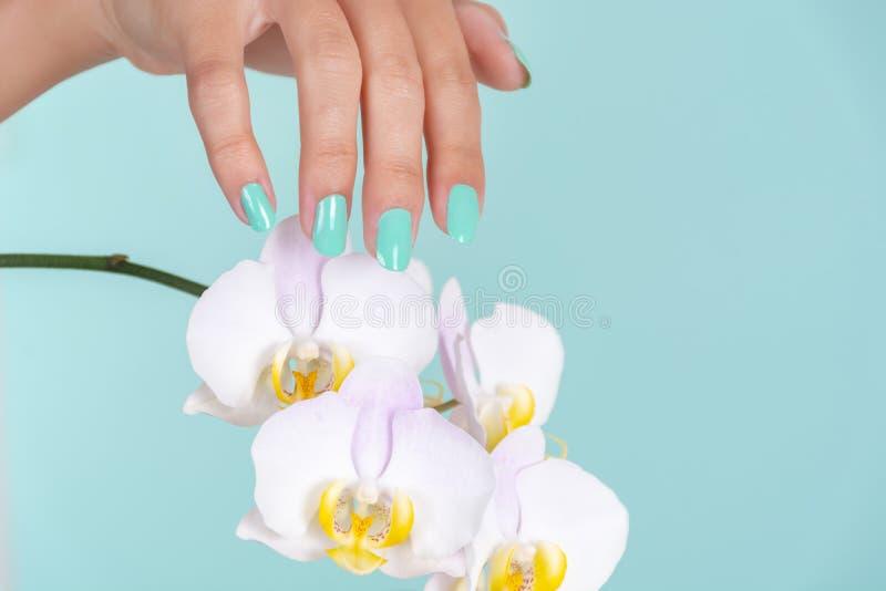 Mano femenina joven con una manicura del color de la turquesa en los clavos y la flor ligera de las orquídeas de la lila aislados fotos de archivo libres de regalías