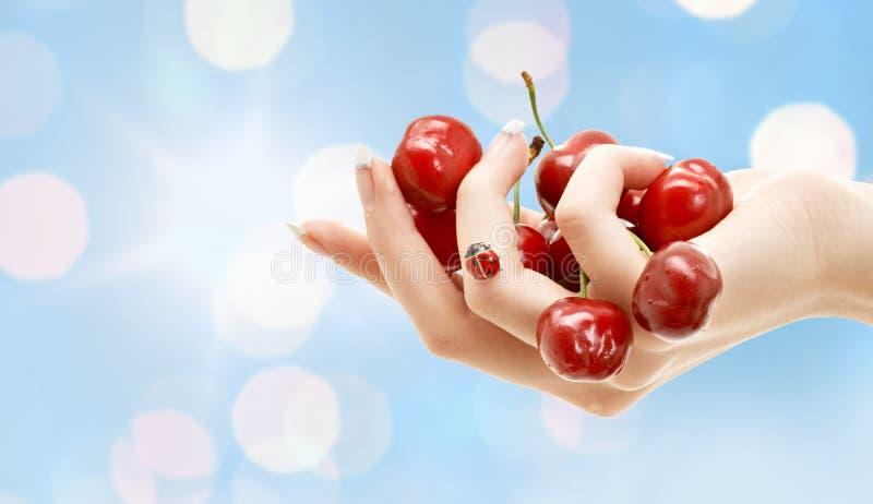 Mano femenina por completo de cerezas rojas fotografía de archivo libre de regalías