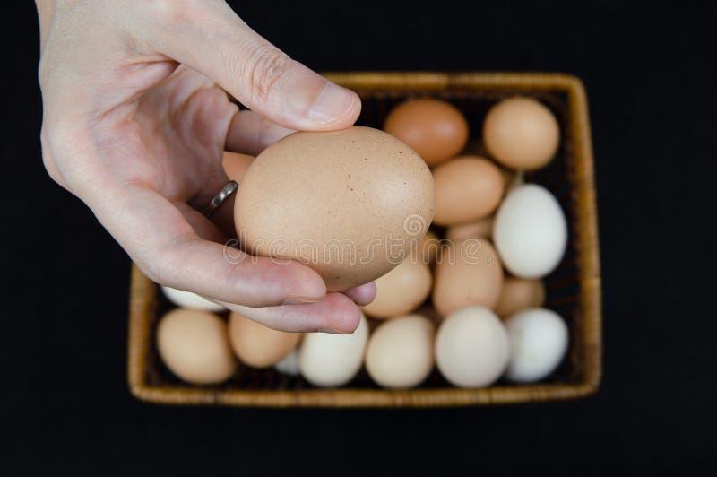 Mano femenina que sostiene un huevo del pollo tomado de una cesta en un fondo negro fotos de archivo