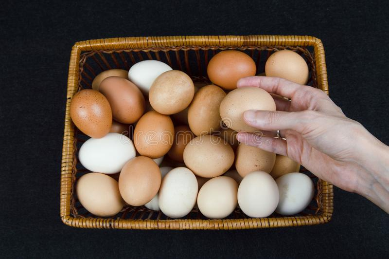 Mano femenina que toma un huevo del pollo de una cesta en un fondo negro imágenes de archivo libres de regalías