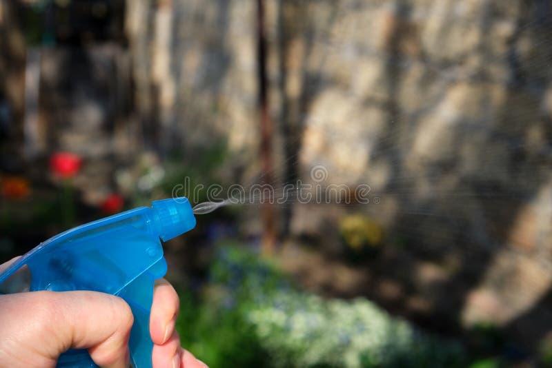 mano femminile che tiene una bottiglia di plastica blu con liquido e che spruzza le piante con i prodotti chimici fotografie stock libere da diritti