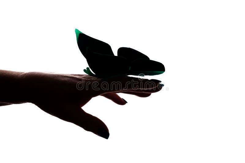 Mano femminile con farfalla artificiale, con disposizione delle farfalle - silhouette isolata fotografia stock