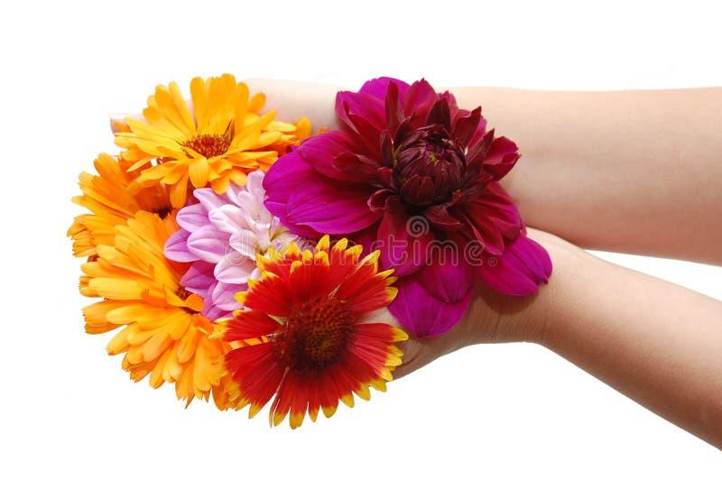 Mano femminile con i bei fiori immagine stock libera da diritti