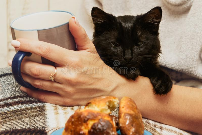 Mano femminile con la tazza ed il gatto nero fotografia stock libera da diritti