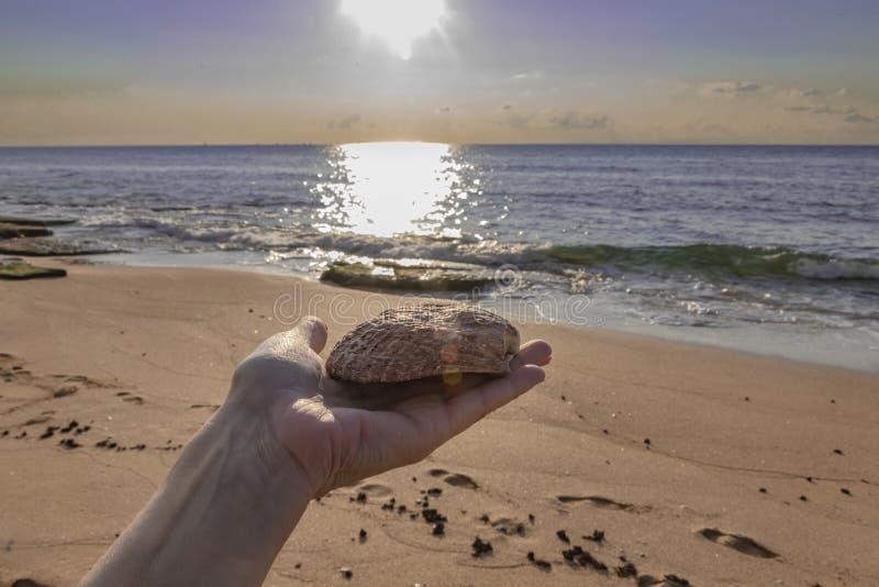 Mano femminile con una grande conchiglia su durante il tramonto sulla costa Mediterranea fotografia stock libera da diritti
