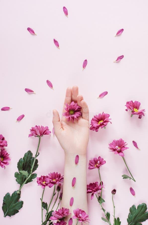 Mano hermosa de la mujer con las flores del purpure en fondo rosado Belleza y concepto de la moda imagen de archivo libre de regalías