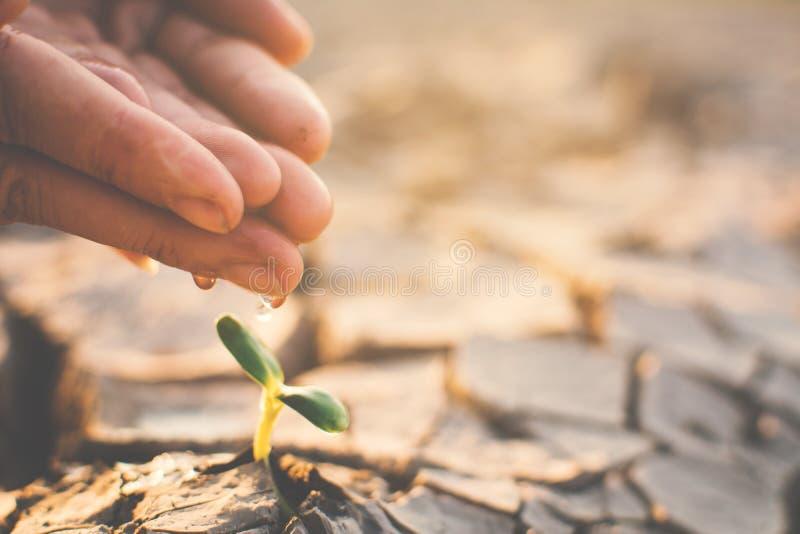 Mano humana que riega poca planta verde en la tierra seca de la grieta foto de archivo